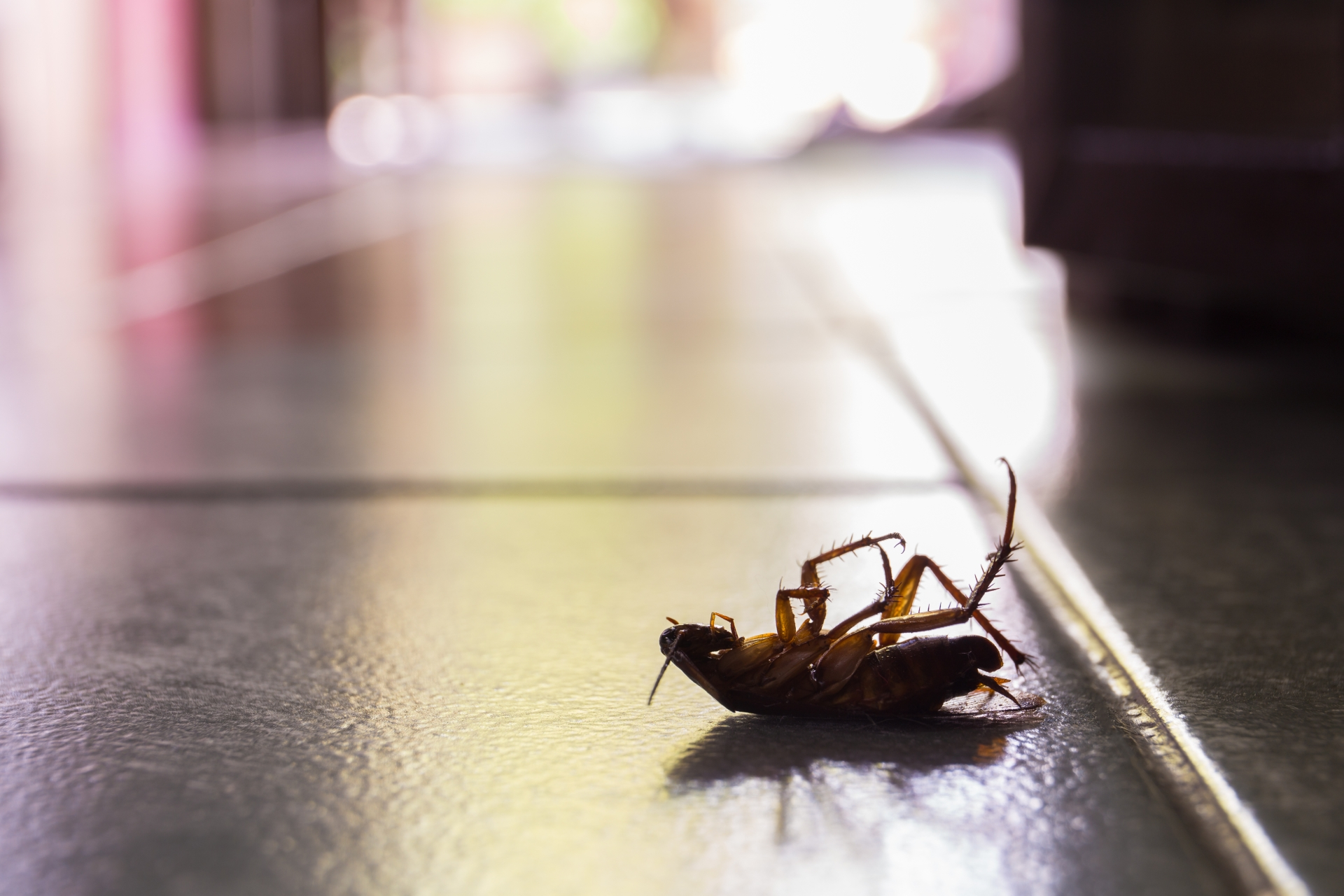 Cockroach Control, Pest Control in Clerkenwell, Finsbury, Barbican, EC1. Call Now 020 8166 9746
